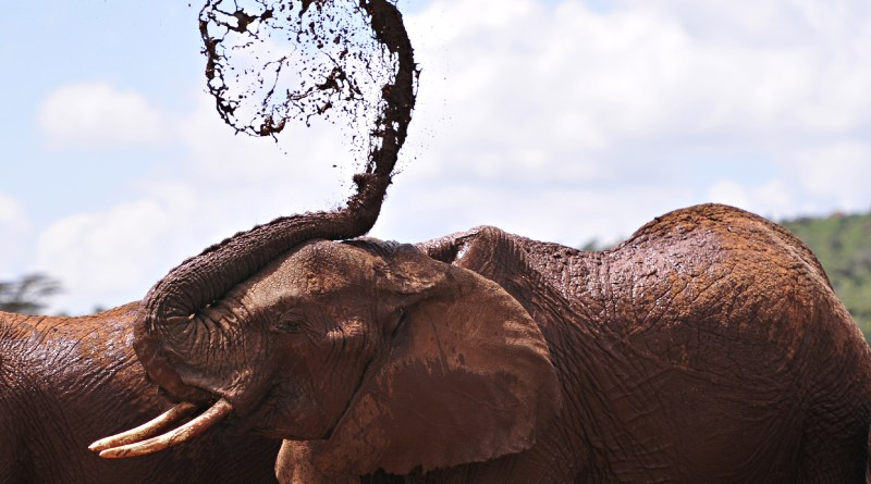 Today Is World Elephant Day. Here's Why That Matters — TIME