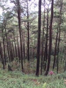 PhilippineTravel.com - Baguio. Photography by EM@QUE.COM