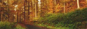 energía limpia y renovable biomasa