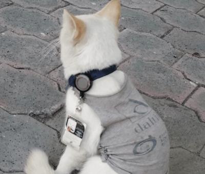 El 'michi celador' sí existe: empresa adoptó un gato y lo contrató como vigilante