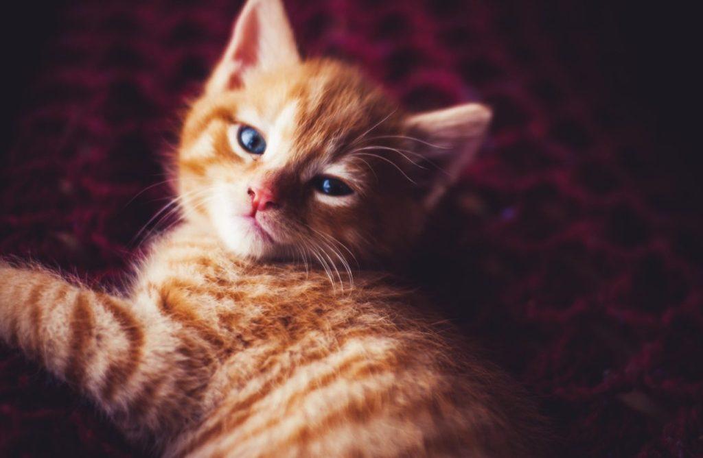 Día Internacional del Gato - 8 de Agosto
