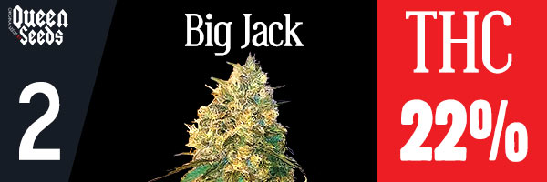 cannabis big jack depression