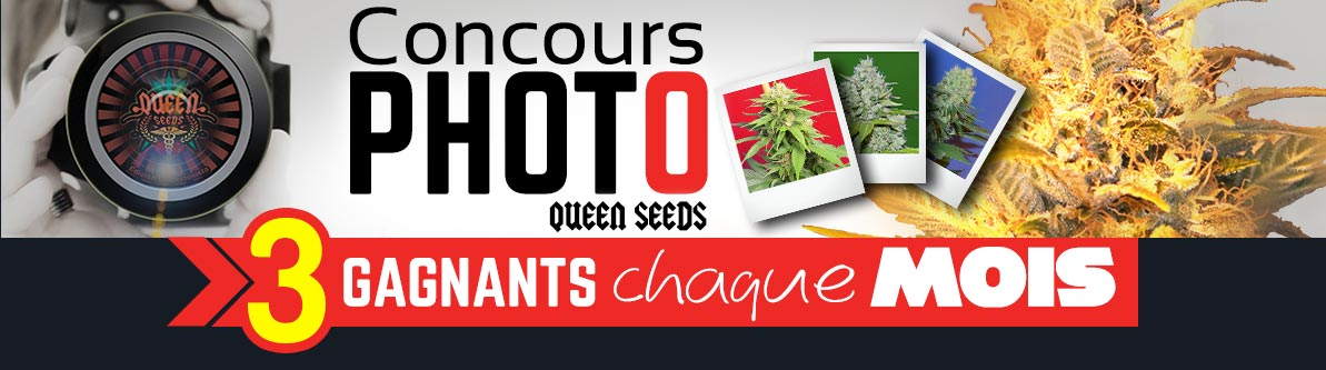 Concours Photo Cannabis Queen Seeds