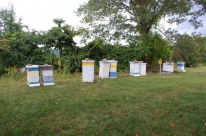 Beehives at the Connecticut Agricultural Experiment Station in Hamden, Connecticut. These are Langstroth hives, created by Lorenzo Langstroth in the 19th century. Connecticut's Apiary Inspector, Mark H. Creighton, maintains them. (Photo by Stephanie C. Fox)