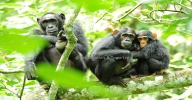 9 days Uganda wildlife safari tour