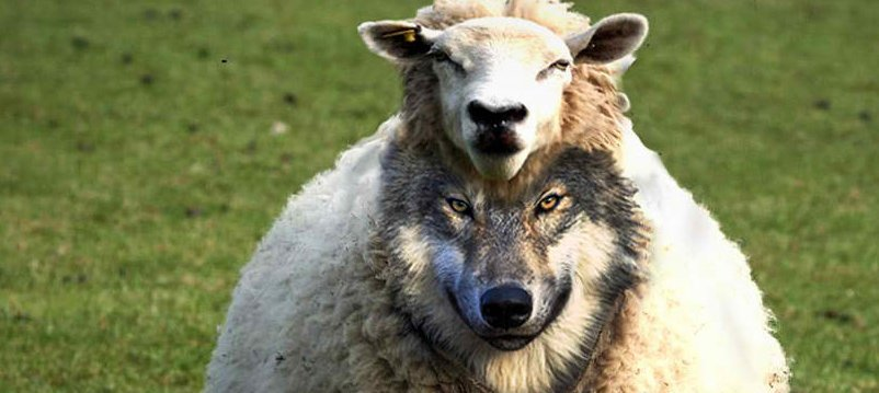 How To Detect A Wolf In Sheep Clothing
