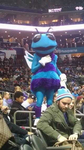 Hugo the Hornet