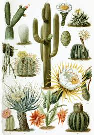 Cactus Oil For Hair And Skin