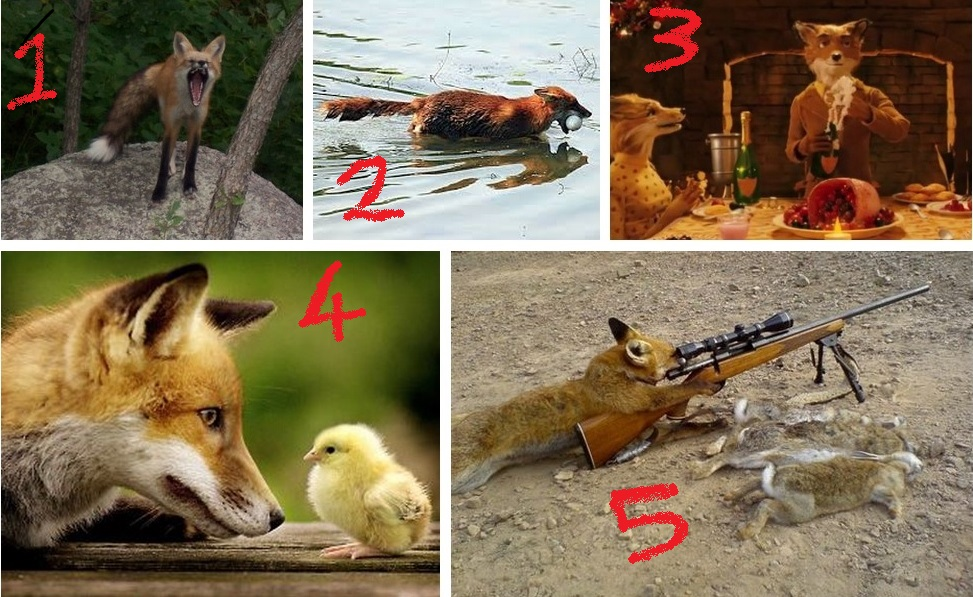 5 foxes that look