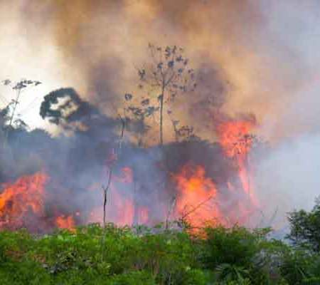 Deforestation in the Amazon and Forests Worldwide