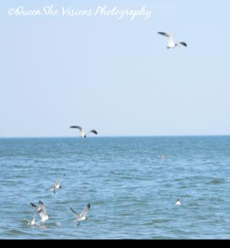 Seagulls Fly