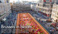 Brussels Biennial Flower Carpet: Blooming Begonia Art ...