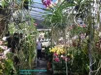 Orchid Nursery at Sanur, Bali (12)