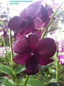Orchid Nursery at Sanur, Bali (3)