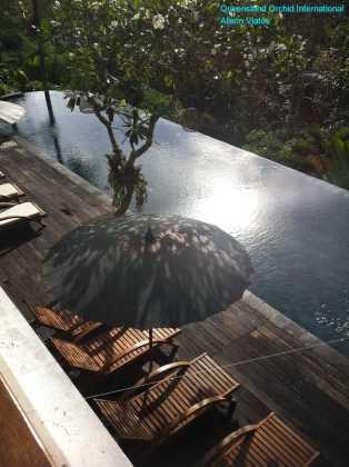 Resort Nestled on a Hillside in the Jungle (1)