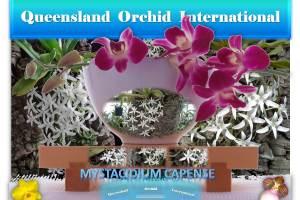 Queensland Orchid International Promoting Diverse