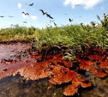 El cemento no ha sido suficiente para deterner la fuga de petróleo en el Golfo de México.