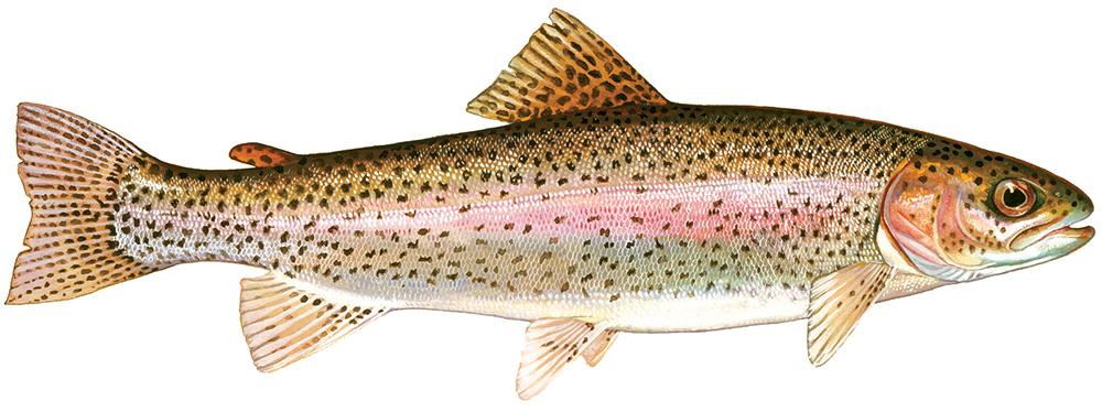 Los peces deben estar en su dieta semanal.