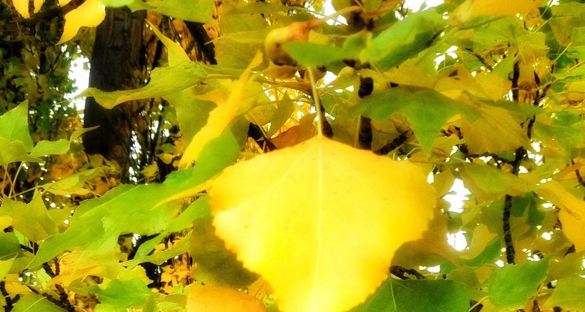 Autumn in Queenstown