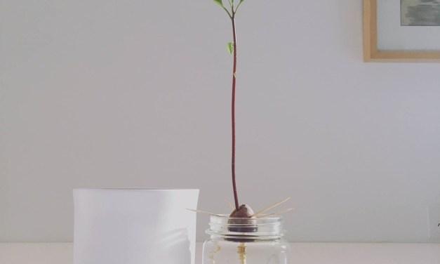 The Art of Indoor Plants
