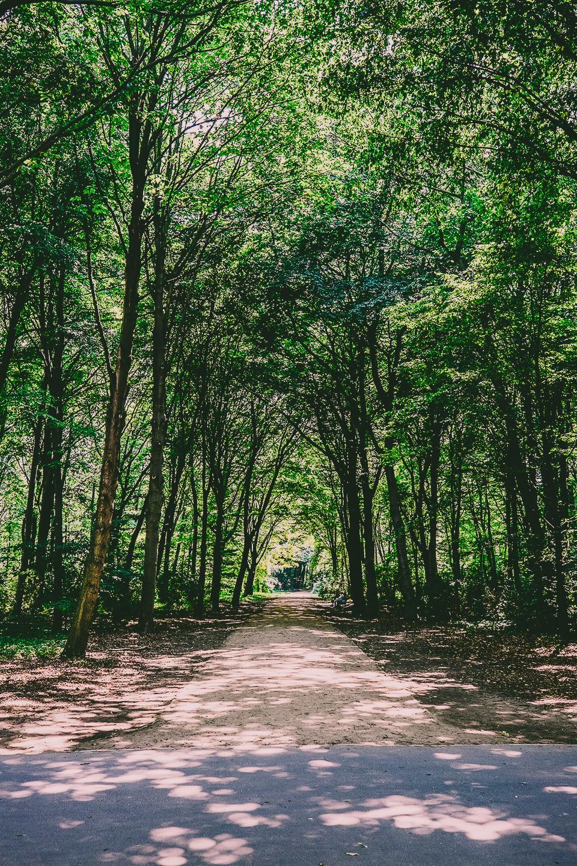 Berlin's Tiergarten. Photo by Davis Staedtler via Flickr