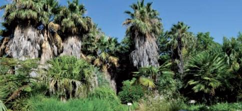 Découverte du Palmetum au Jardin Botanique