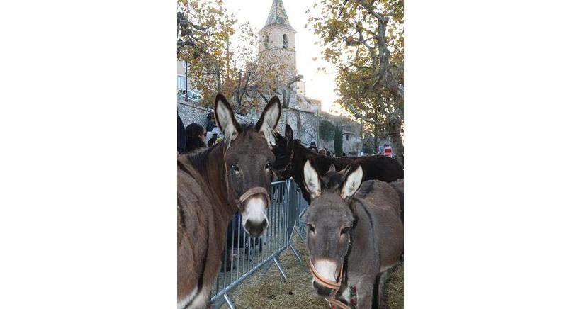 Journée de l'âne à Allauch