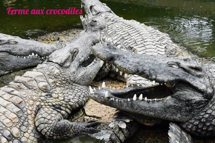 Parc animalier autour de Marseille, Ferme aux crocodiles