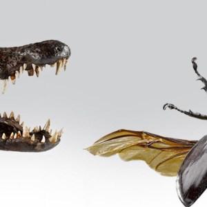Les petites betes museum d'histoire naturelle