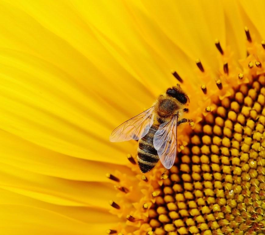 Associação relança site sobre abelhas e mel