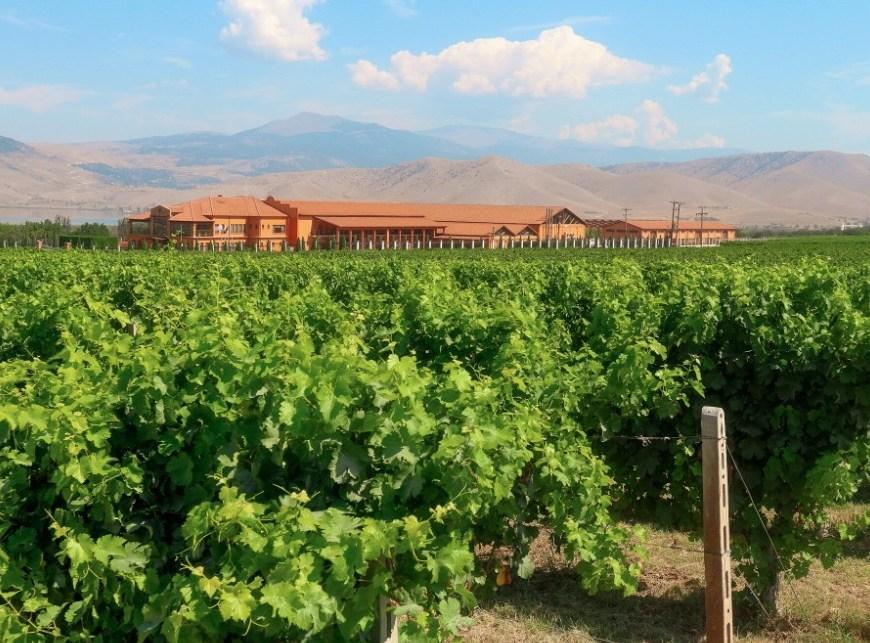 Monte Dictis leva vinhos gregos a Pro Wine 2021 3 divulgacao