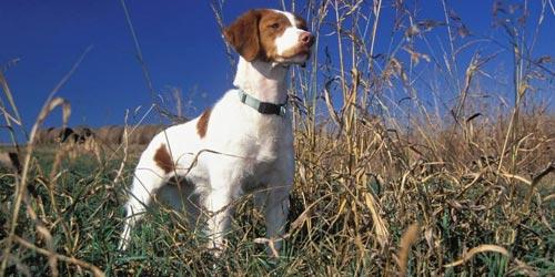 fotos-perros-caza-p