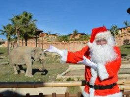 papa noel elefante terra natura