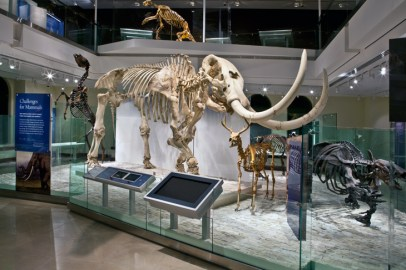 Los-Angeles-Natural-History-Museum-Challenge-for-Mammals-close