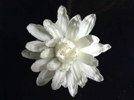 Flor de la Victoria Cruziana en Vigo