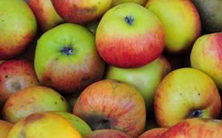 Fiesta de la Manzana 2014 de Redondela