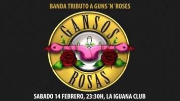 gansos rosas vigo