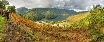 Rutas gratuitas de los vinos D.O. Rías Baixas