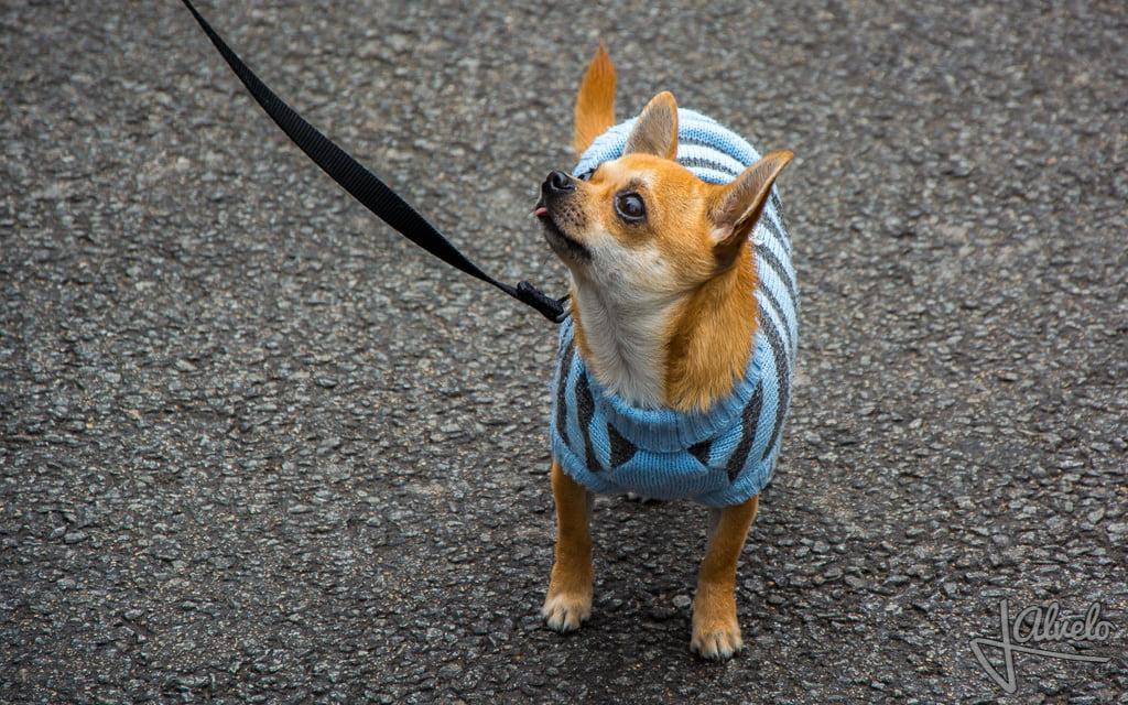Fashion Camelias Solidario Animalista