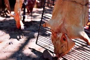 Fiesta de las Delicias de Cerdo en Couso.