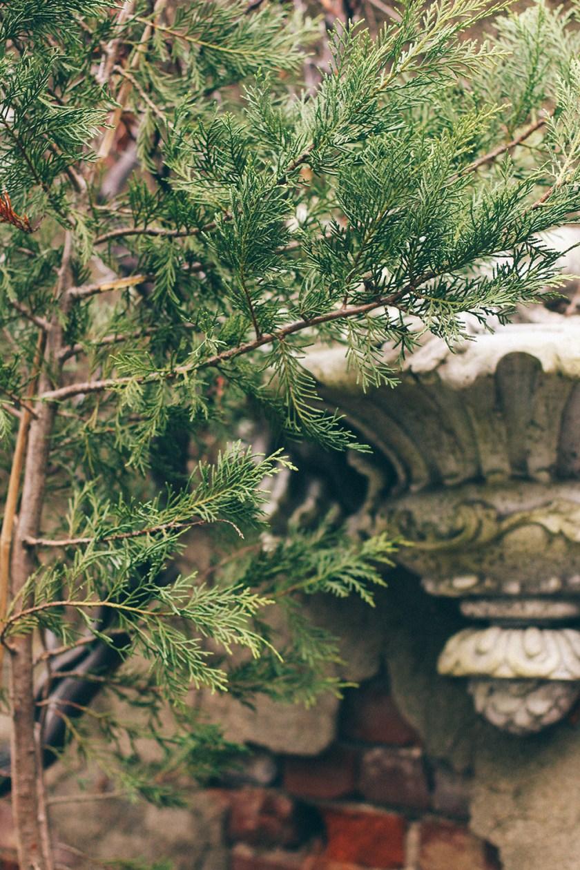In the Winter Garden // www.Quelcy.com