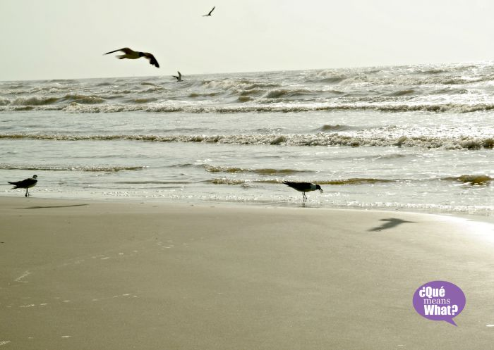 Bird watching on Mustang Island - QueMeansWhat.com