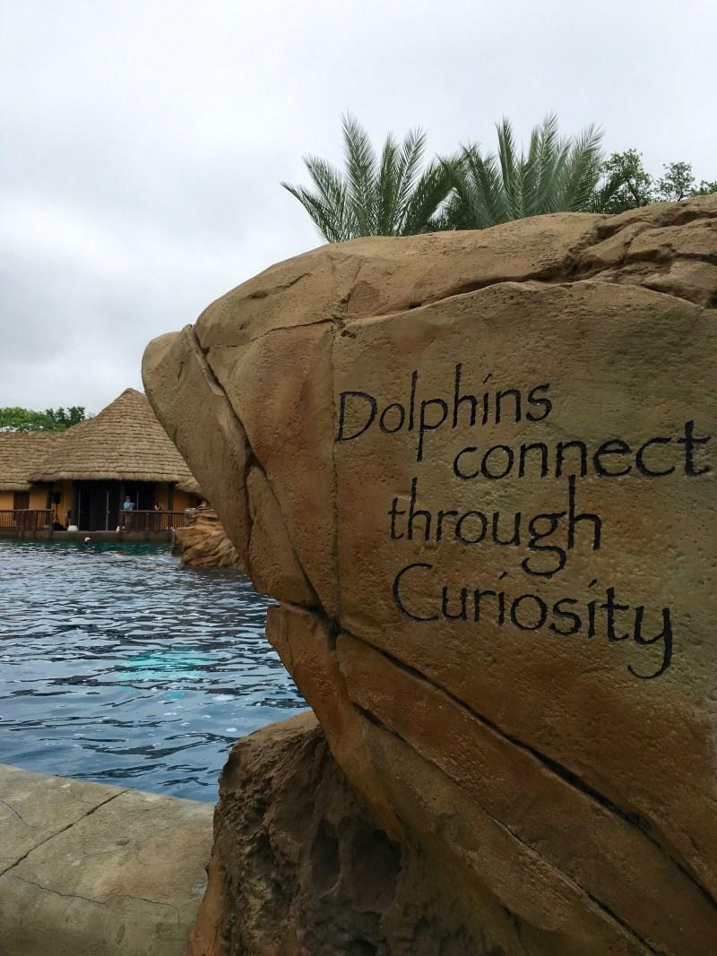 Dolphins Connect Through Curiosity
