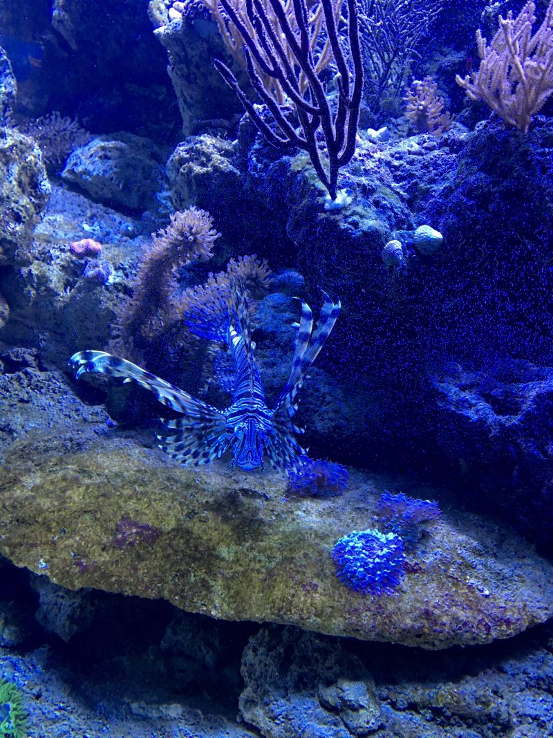 LionFish Explorer's Reef SeaWorld