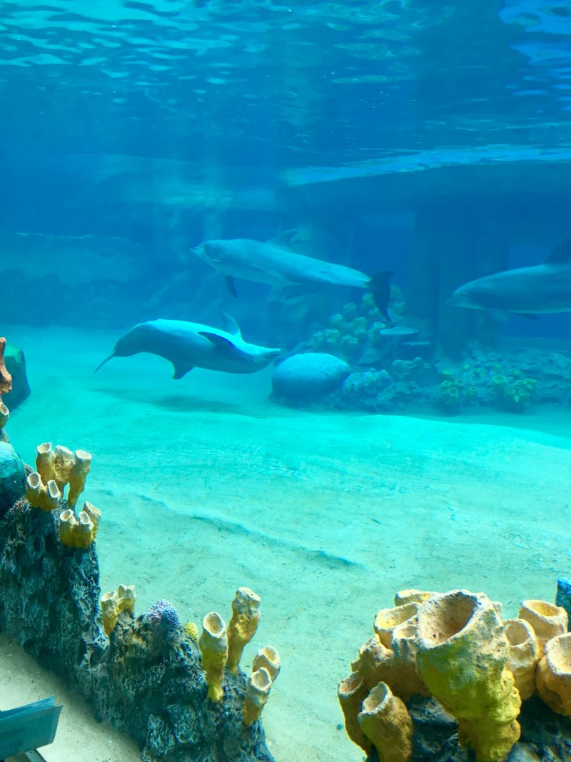 Swimming With The Dolphins At Discovery Point Sea World San Antonio Qu Means What