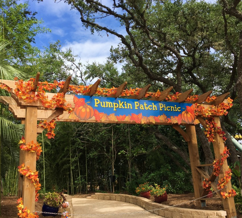 Pumpkin Patch Picnic Sea World San Antonio - QueMeansWhat.com