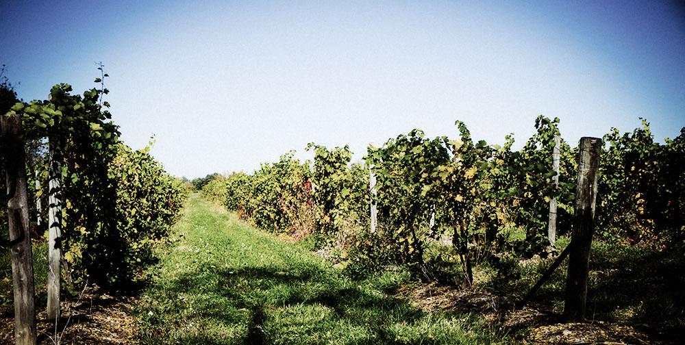 Finger Lakes, NY offers more than just Riesling | Quench Magazine