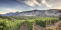 Vanessa Vineyard; BC Wineries