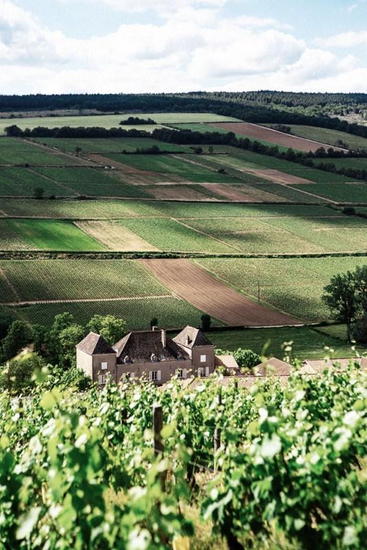 Château de la Greffière's Aligoté vineyard