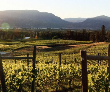 Tantalus Vineyards makes sustainable BC wine